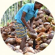Farmhand Renjith
